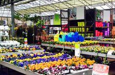 Lekker veel fleur en kleur!