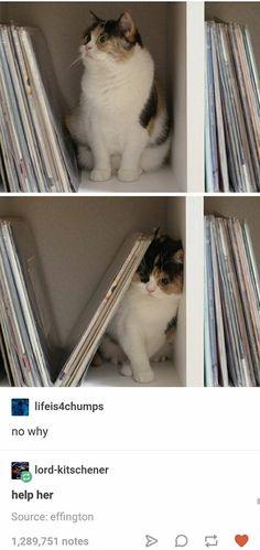 That cat kinda looks like Mapleshade..... I want one.