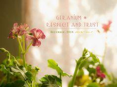 道のりを記憶に残して: 家の中へ、ピンクのゼラニウム/花・ガーデニング