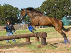 Training Tip of the Week: Teach your horse to jump and cross over obstacles Friday December 30, 2011 Clinton Anderson