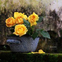 Veronica, Planter Pots, Rose, Instagram Posts, Flowers, Pink, Roses, Royal Icing Flowers, Flower