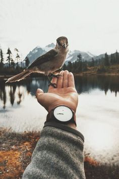 What a great moment that got captured// be friends with all of nature wildlife like this bird that landed on a boho bohemian gypsy hippie hiking camping hand