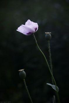 "Фотограф Sabrina_U (проект ""Do_neba"")"