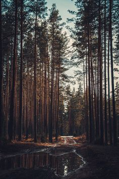 wanderlust, exploring, discover, expedition, adventure, nature, into the wild, forest, trees, path, trail