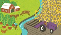 Small vs. large: Which size farm is better for the planet?
