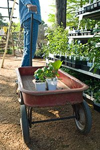 The Natural Gardener, Austin TX. Garden Center that sells native plants and organic gardening supplies.