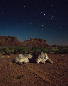 What if we sat outside and looked at the stars each night? by loki_the_wolfdog