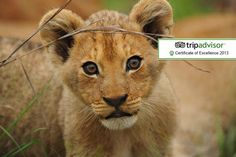 7nt 5* All-Inc. South African Safari
