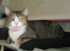 My name is Duchess and I arrived here from another shelter. I was surrendered there by my owners and was pregnant at the time, so the shelter coul...
