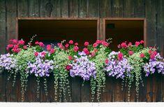 Balcony Planters, Window Planter Boxes, Garden Planters, Deck Railing Planters, Fall Planters, Planter Ideas, Balcony Ideas, Planter Pots, Container Flowers