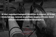 #lókiállítás #nyeregbefel #vásár Budapest, Horses, Movie Posters, Animals, Art, Art Background, Animales, Animaux, Film Poster