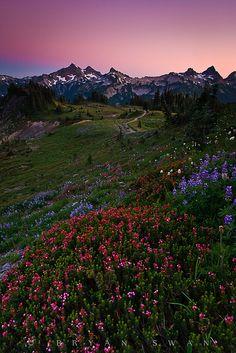 Mazama Ridge, Mt. Rainier National Park by Bryan Swan, via Flickr August 2010