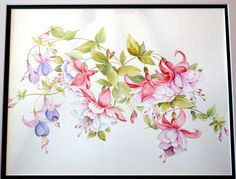 watercolor paintings of fuchsia | Fuchsia Watercolor