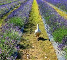 Parece Provence mas e Alentejo!