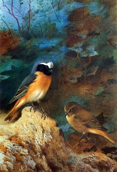 Bird painting by artist Archibald Thorburn.