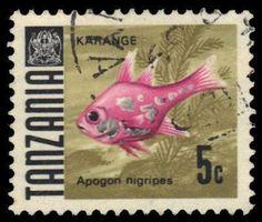 Tanzania Cardinalfish 5c 1967