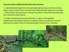Znalezione obrazy dla zapytania białowieski park narodowy Park, Parks