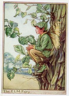 Elm Tree Flower Fairy, c.1950, by Cicely Mary Barker