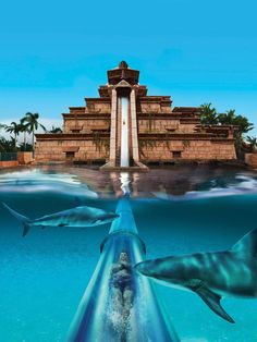 This epic waterslide with surrounding sharks at The Palm in Dubai