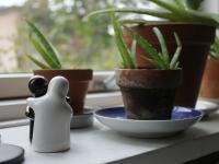 Outdoorküche Klein Wanita : 26 besten my plants bilder auf pinterest gartenpflanzen
