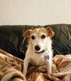 Pupper . . . . #dog #furbaby #bestfriend #puppy #home