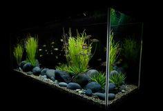 Freshwater Fish Tank Themes