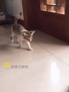 9 Interesting Facts about Cat Whiskers Funny Animal Pictures, Cute Funny Animals, Cute Baby Animals, Animals And Pets, Wild Animals, Cute Kittens, Cats And Kittens, Gato Gif, Cat Whiskers