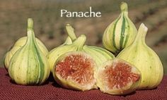 Panache Fig | Dave Wilson Nursery Especially fine flavor! Small to medium-sized fruit with green color and yellow Tiger stripes. Strawberry pulp is blood-red in color.