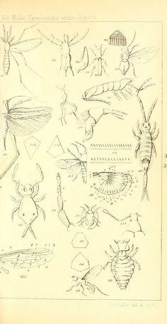 Terminologia Entomologica : - Biodiversity Heritage Library