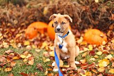 Hidden Doggy Dangers around Your Home This Fall. Most dog owners don't purposefully set out to harm their animals,but each year canines are injured due to..
