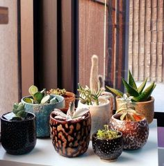 Mixed pots add colour to any room!
