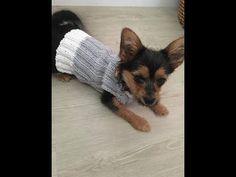 Pull pour petit chien tricot facile - YouTube