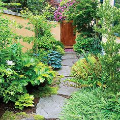 Alley: Rich goldenrod walls now set the mood, and drifts of gold-tinted perennials—Japanese forest grass, autumn fern, and 'Bowles Golden' sedge—reinforce it. Blue Hosta 'Halcyon' adds contrasting color, and Japanese maple and variegated fatshedera give a sense of volume. Now the soothing garden is a pleasure to walk through.