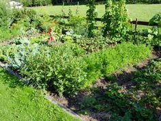 Kalkstickstoff: Ein vielseitiger Helfer für den Garten