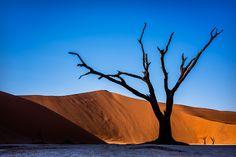 Participa hasta el 31 de agosto en el XI Concurso de Fotografía El Foton elfoton.com #elfoton15 categoría #Flora Usuario: mpereda (Namibia) - Deadvlei - Tomada en Deadvlei el 08/06/2015 #photos #travel #viajes #igers #500px #Picoftheday #Fotos #mytravelgram #tourism #photooftheday #fotodeldia #instatravel #contest #concurso #instapic #instaphotomatix #wanderlust #Namibia #Deadvlei #Africa #Austral Flora, Antelope Canyon, Nature, Travel, Pageants, Pageant Photography, Viajes, Fotografia, Pictures