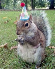 Meet Sneezy, a campus squirrel that lets Penn State student Mary Krupa dress her up a variety of tiny hats.
