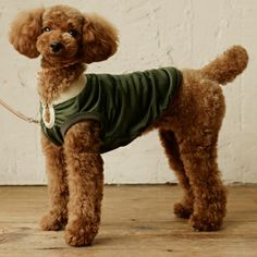 How cute does this pup look in a dog sweater by Free Stitch