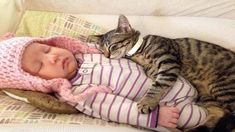 Cute video of a long-haired feline with red claw caps cuddling with a newborn infant. Animals For Kids, Baby Animals, Funny Animals, Cute Animals, Cute Cat Gif, Cute Cats, Funny Cats, Kittens Cutest, Cats And Kittens