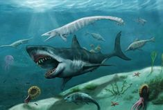 by MightyGodOfThunder on DeviantArt Boat Wraps, Megalodon, Sea Monsters, Prehistory, Art Club, Community Art, Sea Creatures, Underwater, Beast