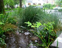 Here's an ASLA resource guide on improving water efficiency for homeowners.