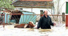 Pessoas arriscam suas vidas salvando animais das devastadoras enchentes nos Bálcãs