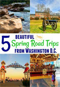 5 Beautiful Spring Road Trips from Washington DC Weekend Getaways From Dc, Weekend Trips, Day Trip, City Beach, Ocean City, Travel With Kids, Family Travel, Assateague Island National Seashore, Spring Break Trips