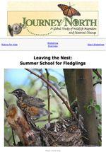 Leaving the Nest: Summer School for Fledglings - slideshow, photo gallery, teaching ideas