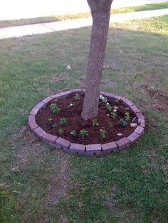 When considering a garden beneath a tree, it is important to keep a few rules in mind. Otherwise, your garden may not…