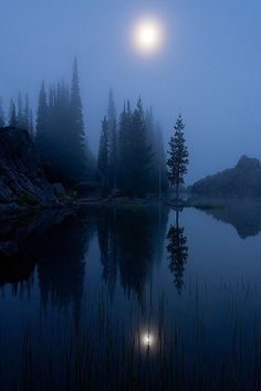 Misty Moonlit Night