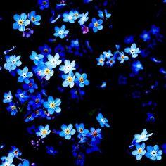 dreamingviolet