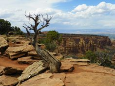 Scrub Pine Overlook Photo by: J.S. Petralito Natural Art in the Colorado National Monument Park, Grand Junction, Co.