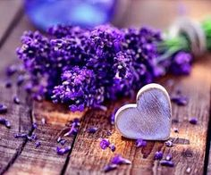 simply-beautiful-world - Posts tagged lavender Lavender Cottage, Lavender Fields, Lavender Flowers, Lavender Oil, Purple Flowers, Lavender Bouquet, Purple Hearts, Spring Flowers, Simply Beautiful