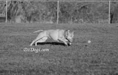 DZ's Adventures: Doggy Rehab Hiking Dogs, Dog Treat Recipes, Health And Safety, Dog Treats, Dog Training, Husky, Adventure, Pets, Animals
