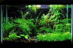 Starting a Planted Aquarium Tank and Garden #AquariumAccessories #AquariumTanksIdeas